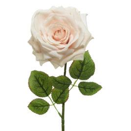 Rosa White