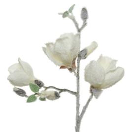 Magnolia bianca cm 50